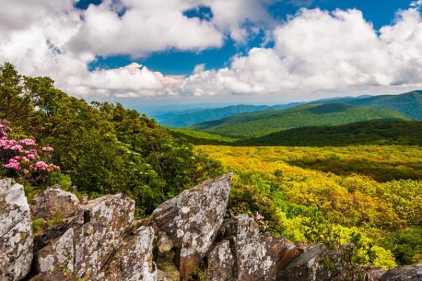 Shenandoah National Park View