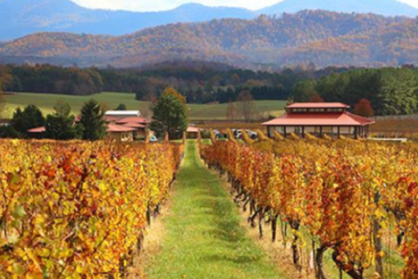 Barboursville Vineyards in the fall