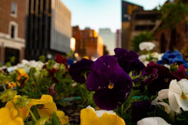 Spring in West Village