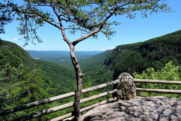 You can enjoy epic views all along the West Rim Loop Trail at Cloudland Canyon State Park.