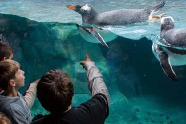 Aquarium 975x355