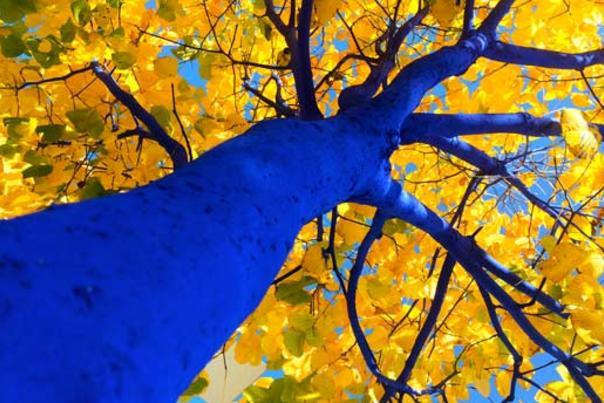 Bluetreessmaller