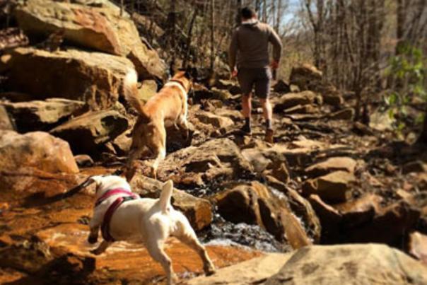Dogs Crossing Stream