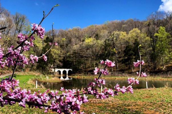 6 Scenic Spring Trails (Plus Lunch)