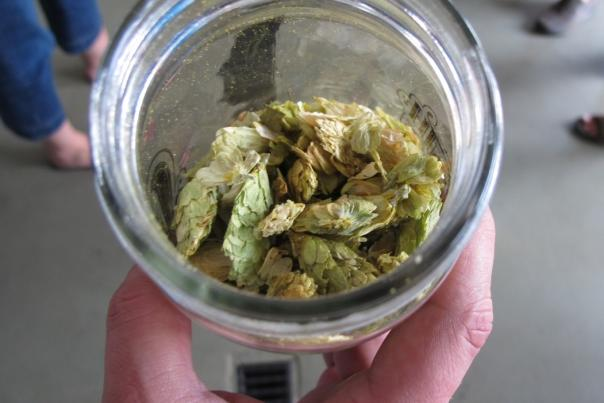 Hand holding open jar full of beer hops
