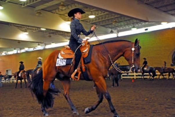 quarter horse congress 3