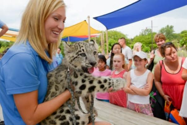 A handler holds a baby cheetah at the Columbus Zoo