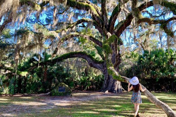 The majestic Fairchild Oak in Bulow Creek State Park
