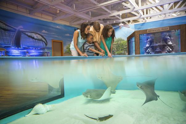 Family Friendly Activities Marine Science Center Blog