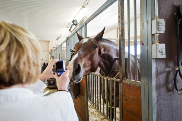 HorseCountryTour courtesy Denton CVB by Hannah Gamble (32)