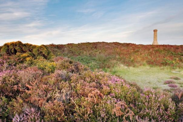 Heather at Black Down in Dorset