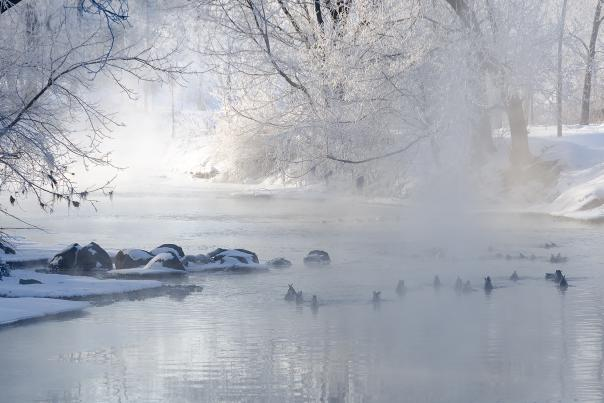 Nature - Forest Preserve Winter