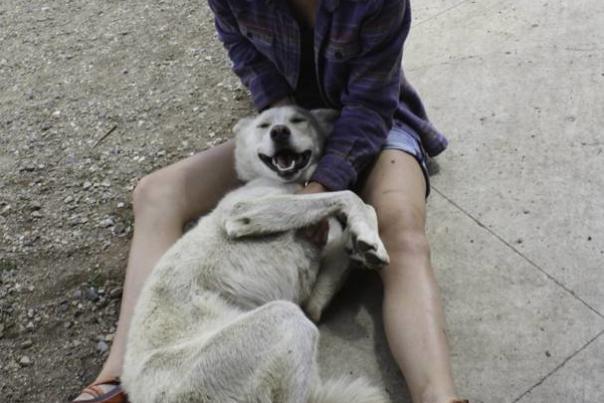 Meet the Dogs who Run Durango