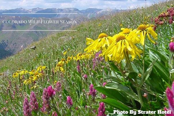 Durango's Wildflower Season