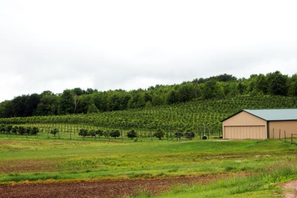 Wineries in The Chippewa Valley