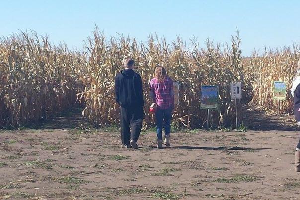 Govin's Corn Maze