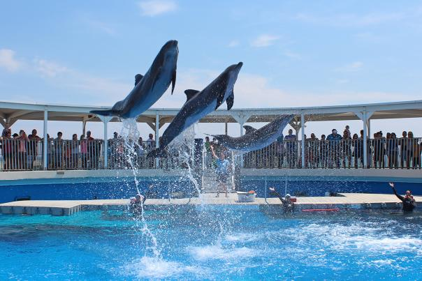 Gulfariums & Zoos