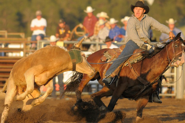 Rodeo_Cowboy-Roping-Steer