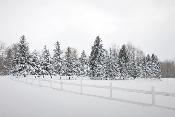 Ontario County Winter