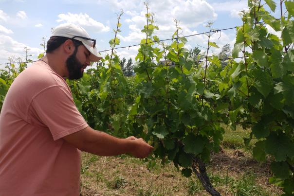 Andrew Mavromatis talks grapes