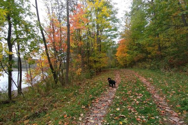 canadice-lake-hiking-fall-foliage