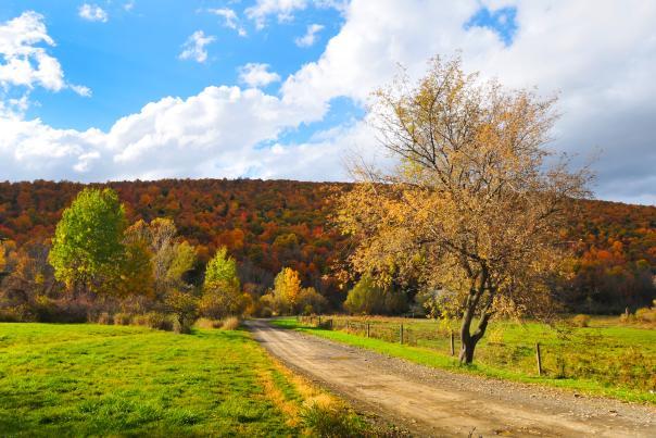 fall-roads-ontario-county