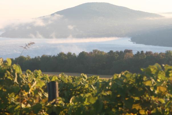 Vineyards overlooking Canandaigua Lake