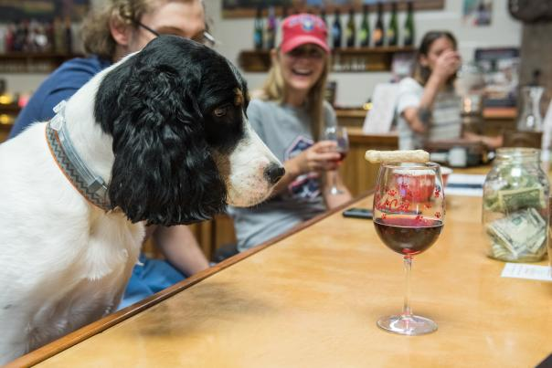 Pet friendly wine tasting at Hazlitt's