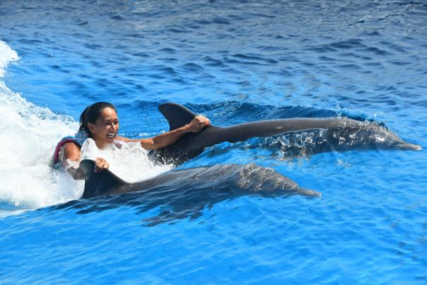 marineland dolphin