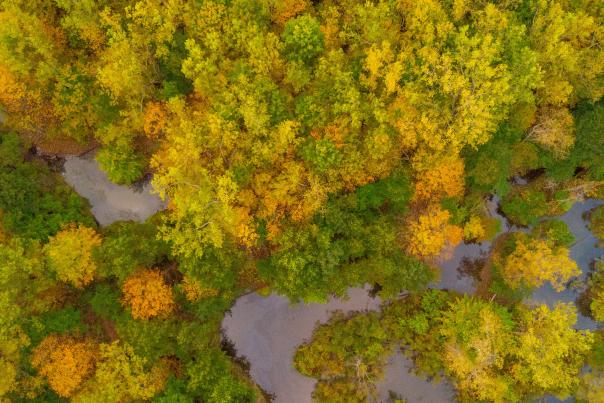 Aerial photo of trees turning fall colors around the Flint River