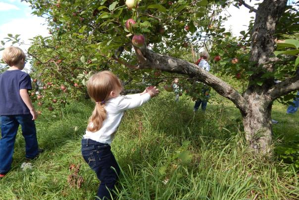 Spicer's Orchard