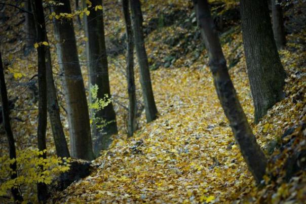 fall-colors3-640x427