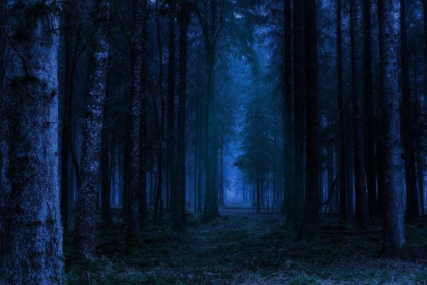 Stock Photo Scary Forest