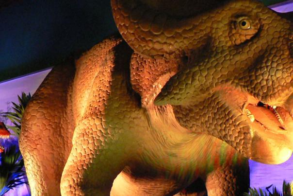 see_dinosaurs