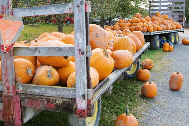 see_pumpkinPicking