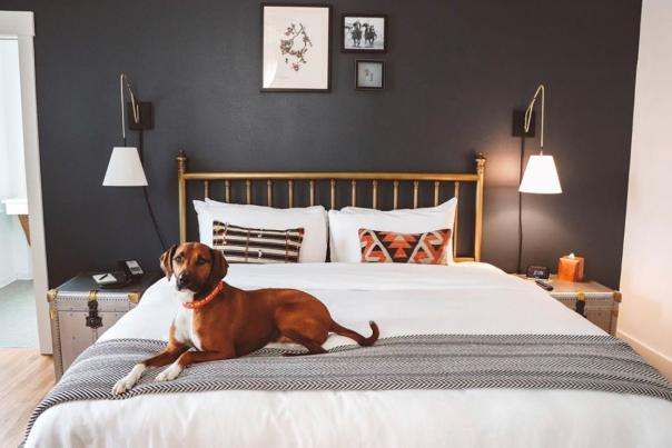 Dog friendly Armstrong Hotel