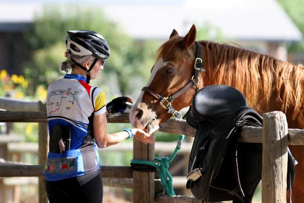 Tour de Farms Bike Horse