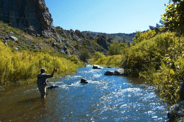 poudre-river-fly-fishing