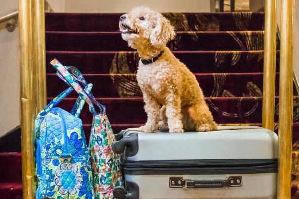Dog at the Hilton at the Grand Wayne Center
