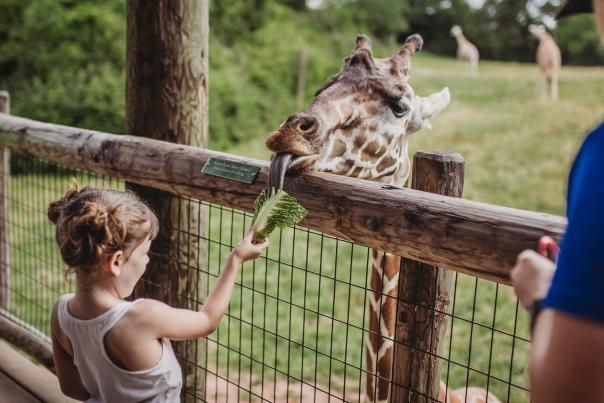 Fort Wayne Children's Zoo - Giraffe Encounter Open Graph