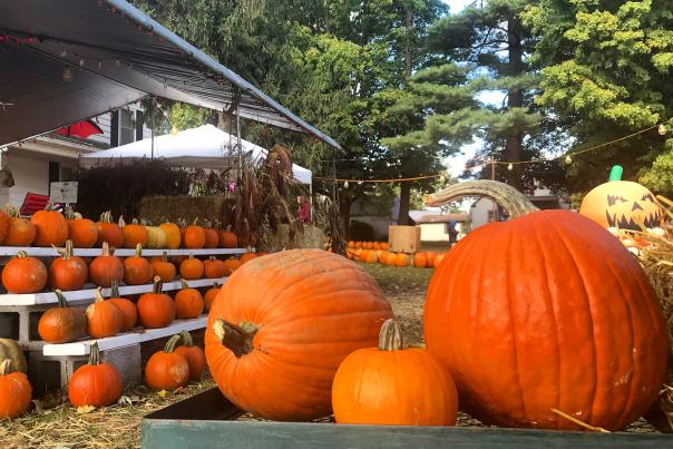 Cedar Creek Produce Pumpkin Patch