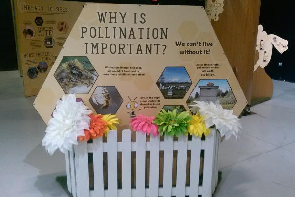 Pollination Exhibit - Science Central