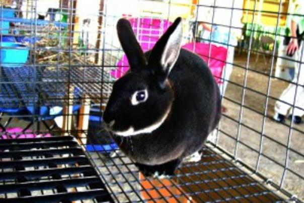 Rabbit at the fair 300x225