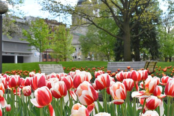 Copy of Spring Flowers in Freimann Square - Downtown Fort Wayne