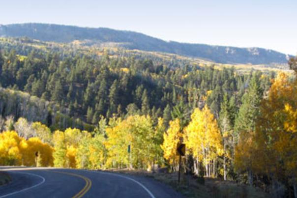 Scenic-Byway12-Aspens-Color