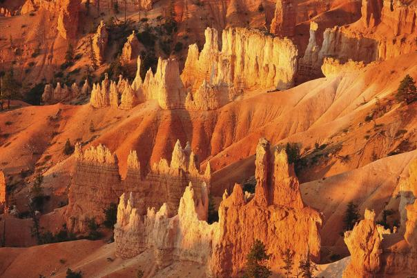 bryce-orange-rocks