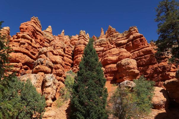 red-canyon-summer-rocks