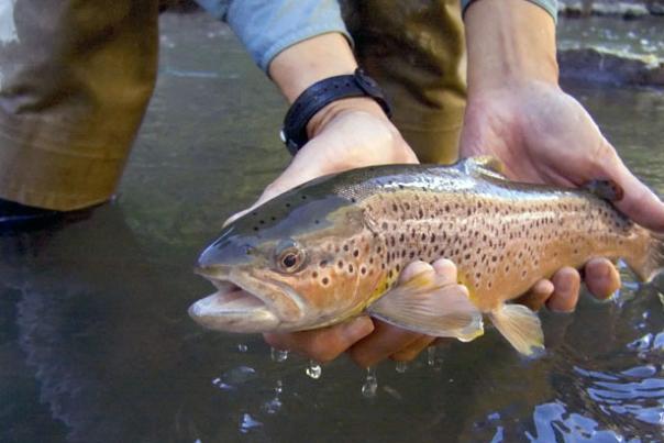 utah-stream-fishing