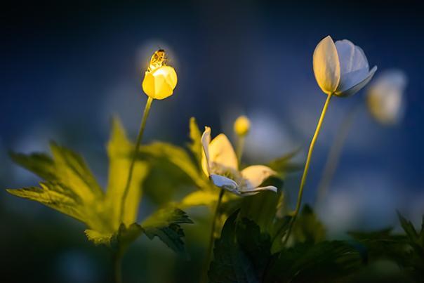 © Firefly Experience - Radim Schreiber