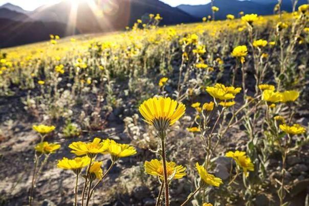 FI-blog-posts-wildflower